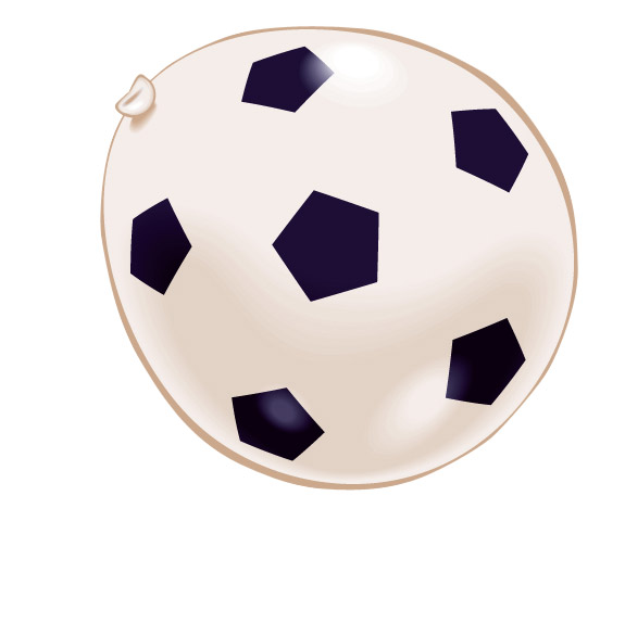 Photo du produit 8 Ballons football